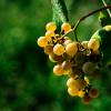 后记 | 8大白葡萄品种的盲品秘诀:知味盲品进阶赛第2场