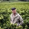 一位50年如一日朴实谦卑的农民,竟酿出了全世界最名贵的酒,秘诀是什么?