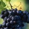 有哪些世界顶级的赤霞珠葡萄酒?