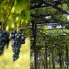 伊安·达加塔《意大利原生葡萄品种》新书发布