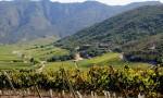 智利葡萄酒:向清新进发