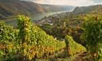 探索全世界最古老的酒庄,德国Schloss Vollrads酒庄庄主品鉴会