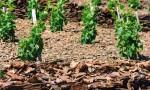 什么是葡萄酒中的矿物香气?