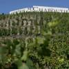 酒评家布尔奇:罗纳河谷的强势崛起
