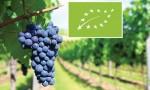 欧盟启用有机葡萄酒新规定