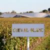 白马酒庄Cheval Blanc揭秘: 剖析风土的宗师