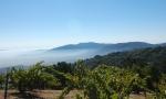 见证巴黎盲品会的加州名庄:山脊庄园 Ridge Vineyards