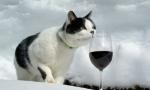 听说你想学葡萄酒?