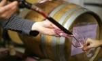 施晔:我在南非酿酒的日子(五)